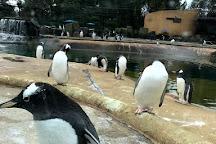 Edinburgh Zoo, Edinburgh, United Kingdom