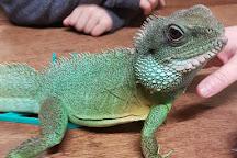 The Reptile Experience, Saundersfoot, United Kingdom