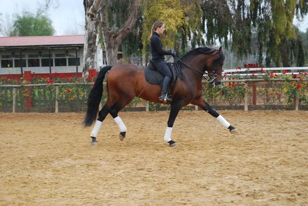 Epona Spain - Equestrian Center