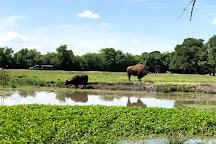 Bayou Wildlife Zoo, Alvin, United States