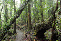 Best Of All Lookout, Springbrook, Australia