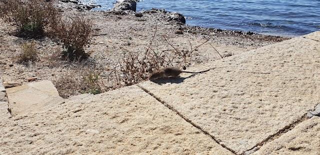 Centro Visite - Parco Nazionale dell'Asinara