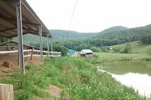 Mountain Valley Farm, Ellijay, United States
