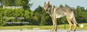 Evergreen - Educateur canin, comportementaliste canin dans les Landes