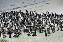 Gypsy Cove, Stanley, Falkland Islands