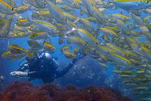 Dive Point, Ko Samui, Thailand