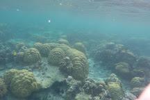 Tubod Marine Sanctuary, Siquijor Island, Philippines