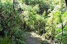 Monteverde Orchid Garden