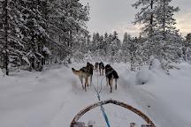 Wingrens Dogsafaris, Kongas, Finland