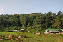 Mahananda Wildlife Sanctuary, Darjeeling, India