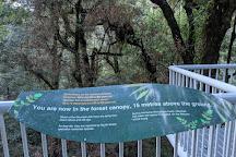Warburton Rainforest Gallery, Warburton, Australia