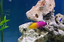 Blue Reef Aquarium Hastings, Hastings, United Kingdom