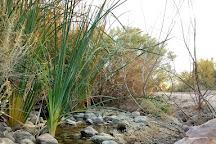 Clark County Wetlands Park, Las Vegas, United States