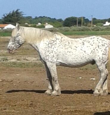 Horse Club (Équitation)