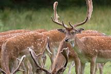 Bolderwood Deer Sanctuary, Lyndhurst, United Kingdom