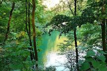 Beech Forest (Puszcza Bukowa), Szczecin, Szczecin, Poland
