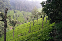 Tiger Hill Cemetery, Coonoor, India