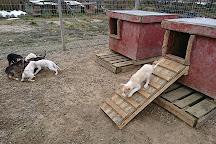 Jytky Hysky Sled Dog Camp, Inari, Finland