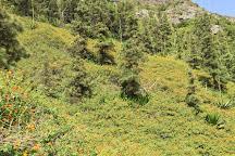 Parque Natural do Monte Gordo, Sao Nicolau, Cape Verde