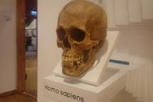 Estonian Health Care Museum, Tallinn, Estonia