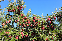 Susquehanna Orchards, Delta, United States