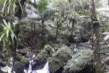 Juan Diego Falls, El Yunque National Forest, Puerto Rico