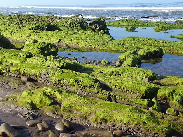 County Of Sb / Rincon Beach
