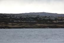 Victory Green, Stanley, Falkland Islands