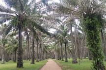 Jardin botanique de Bingerville, Abidjan, Ivory Coast