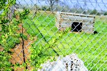 Tiger Safari Zoological Park, Tuttle, United States