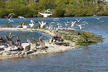 Turtle Mound River Tours, New Smyrna Beach, United States