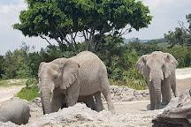 Africam Safari, Puebla, Mexico