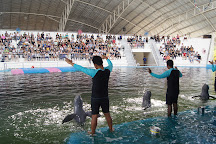 Pattaya Dolphin World, Pattaya, Thailand