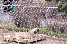 Lake Superior Zoo & Zoological Society, Duluth, United States
