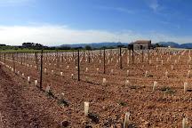 SON PRIM Bodega, Sencelles, Spain