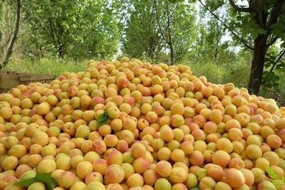 باغ و میوه فروشی عاشوری