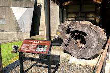 Yakusugi Museum, Yakushima-cho, Japan