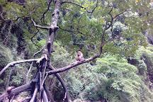 Ko Pa Nak, Ao Phang Nga National Park, Thailand