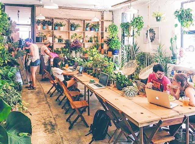 Stonefruit Botanical