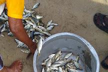 Vizhinjam Fishing Harbour, Kovalam, India