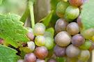 Turdo Vineyards & Winery