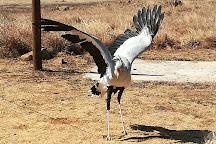 Dullstroom Bird of Prey & Rehabilitation Centre, Dullstroom, South Africa