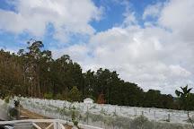 Ashton Hills Vineyard, Summertown, Australia