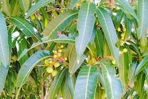 Leon Levy Native Plant Preserve, Eleuthera, Bahamas