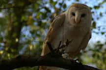 Forest Falconry, Landford, United Kingdom