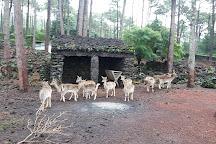Parque Florestal de Sao Joao, Lajes do Pico, Portugal
