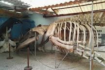 Museo de las Ballenas, Salinas, Ecuador