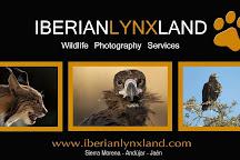 Iberian Lynx Land, Andujar, Spain