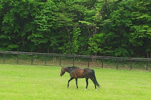 Shadai Stallion Station, Abira-cho, Japan