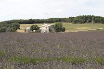 L'Essentiel De Lavande, Clansayes, France